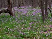 Цветы на Ай-Петри